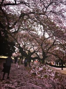 20160409_桜を見る会001